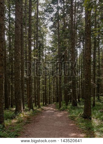 Percorrendo il sentiero CAI 00 - Appennino Tosco-Emiliano Foresta dell'Abetone