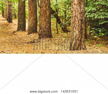 Autumn Forest Landscape With A Blank Space For Text