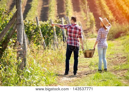 Back view of young couple walking between rows of vines