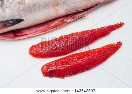 fresh gutted red fish salmon on white background Salmon roe