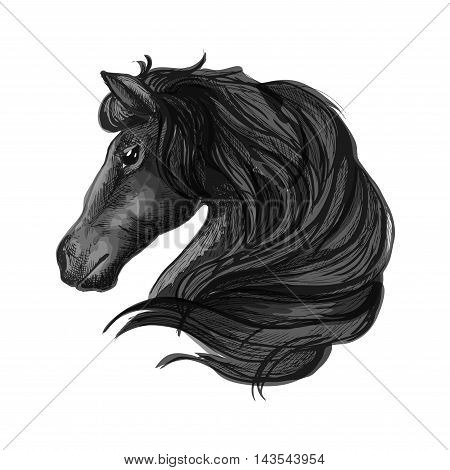 Black horse head icon with sketched arabian stallion. Equestrian sporting competition symbol, riding club or horse racing badge design