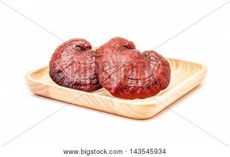 ganoderma lucidum mushroom rare mushroom on wooden plate isolated in white background