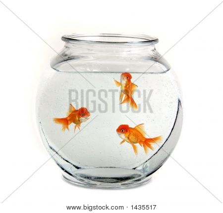 Three Goldfish In A Bowl