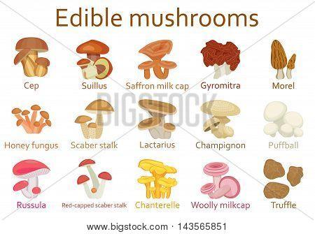 Edible mushrooms flat icon set. Vector illustration.