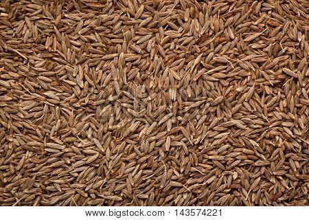 Closeup of a lot of cumin seeds