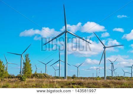 Wind turbine farm near Paldiski. Pakri peninsula Baltic Sea Estonia Europe