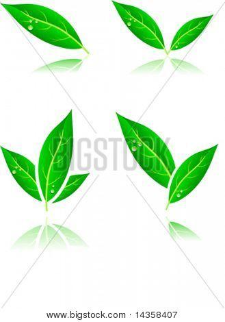 Beautiful leaf icons. Vector illustration.