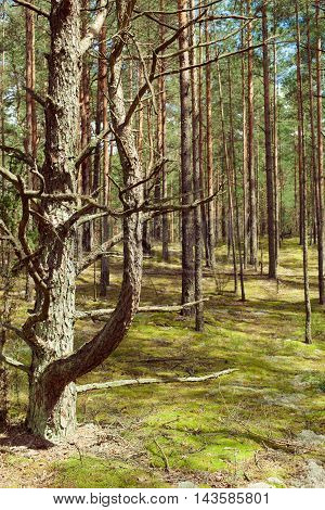 The view on the beautiful wild forest with lots of trees