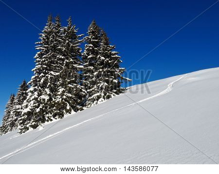 Wintery firs in Gstaad. Winter background. Swiss Alps.