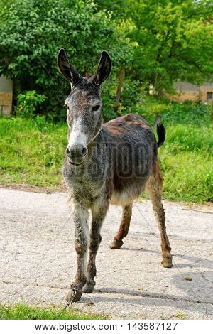 Donkey in a village street on a sunny day