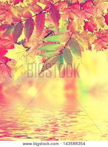 Autumn landscape. Colorful trees. foliage. Indian summe