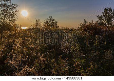 sunrise on shore of lake Ladoga, Karelian isthmus, Russia
