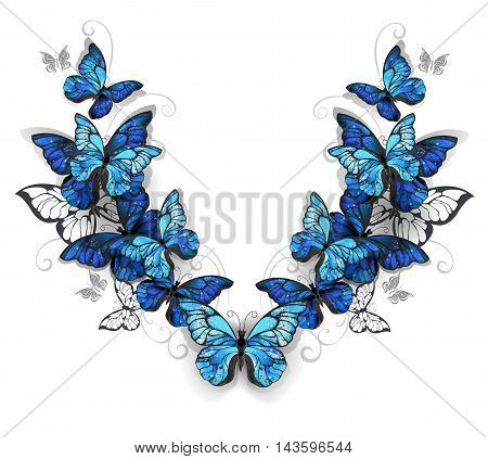 Symmetrical pattern of blue realistic morfid butterflies on a white background. Design with butterflies. Morpho. Design with blue butterflies morpho.