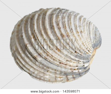 macro shot of a sea shell in light back