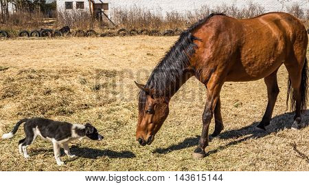 Photo brown horse and dog getting to know each other
