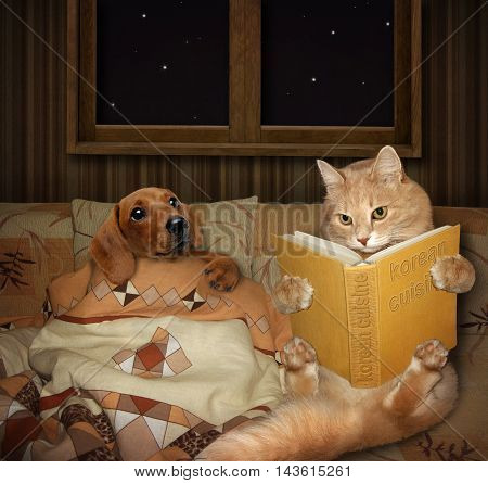 A cat is reading a bedtime story for a dog. The fairy tale is called Korean cuisine.