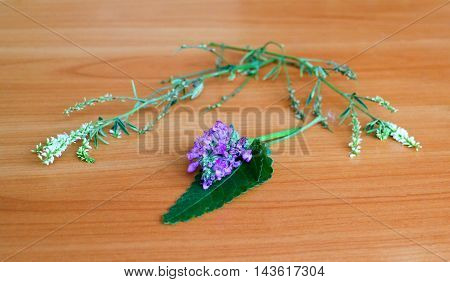 bouquet of wild flowers on the table flowering mint succession