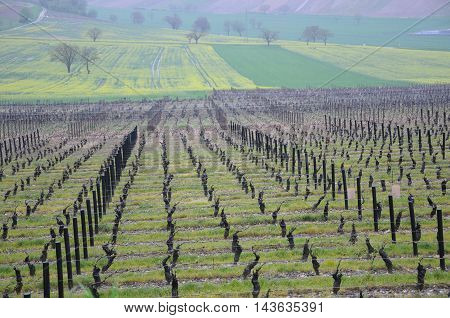 the beautiful vineyards in sancerre where wine is produced france