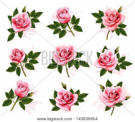 Set of beautiful pink roses. Vector.