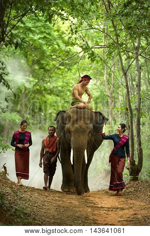 The Elephant with mahout peoples at surinThailand.