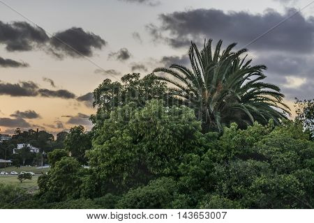 Leafy nature against sunset sky background in Montevideo Uruguay
