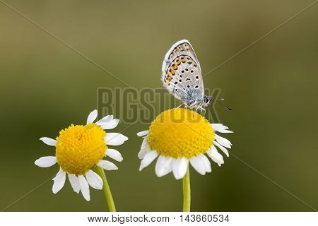 A beautiful butterfly on the plant in its natural habitat
