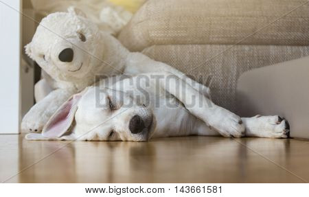 Tired dog lying on the floor with his polar bear cuddly toy