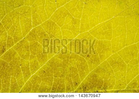 Leafs texture close up macro abstract bacground