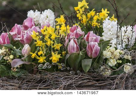 Basket with tulips, hyacinths and other spring flowers