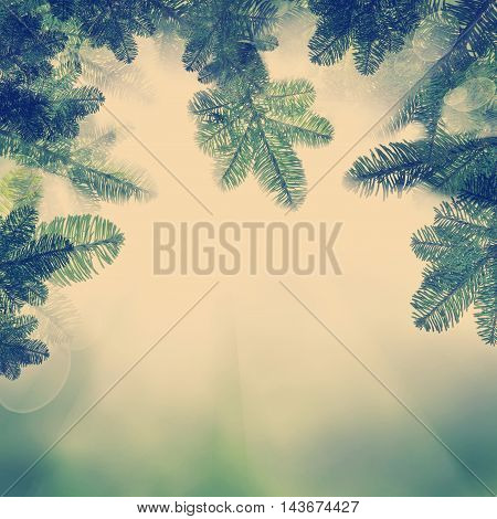 Background with Christmas Tree. Green Xmas Twig and Light on Fantasy Background
