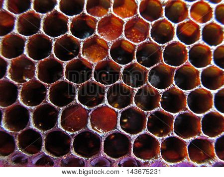 Natural propolis honeycomb texture background close up