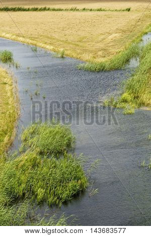Wetlands reeds and dry grass crossing paths in the national park the Biesboasch