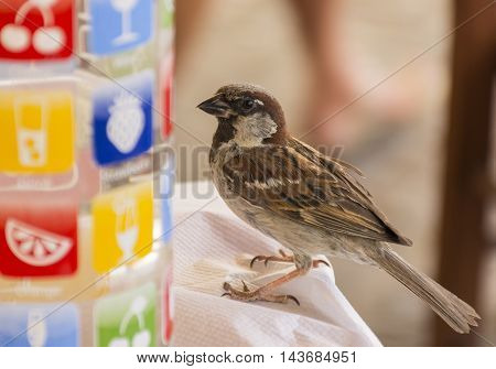 funny Sparrow sitting on the table next to a glass bottle with colourful pictures