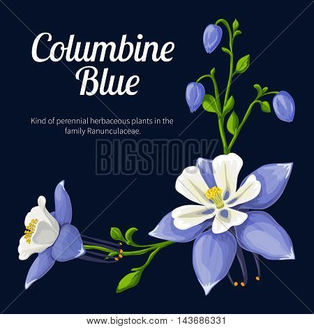 Blue Columbine. Vector illustration of a flower, made in a realistic style