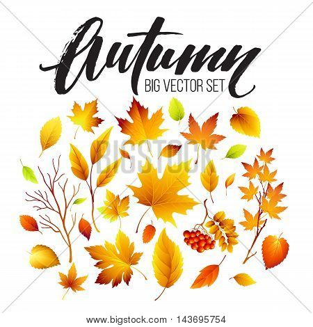 Color autumn leaves on white background. Fall leaf set. Vector illustration EPS10
