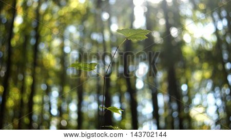 A green leaf growing in the middle of the forest.
