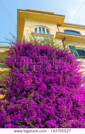 Old Building With Bougainvila Flowers