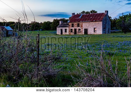An Interesting Sunset Photo of an Abandoned Old Rock Homestead in a Beautiful Field Loaded with the Famous Texas Bluebonnet (Lupinus texensis) Wildflowers.