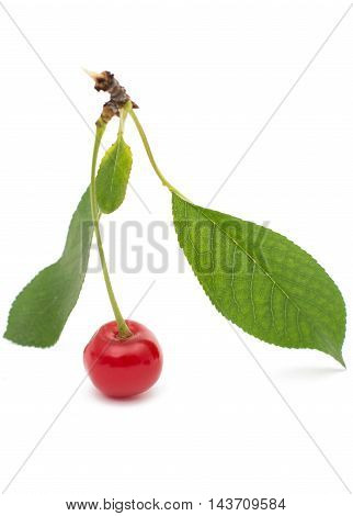 cherry ingredient food on a white background