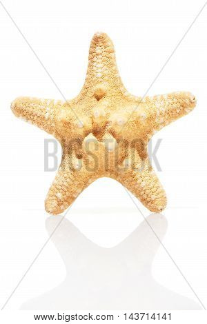 Starfish isolated on white background with reflection