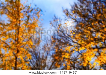 Blurred autumn tree background