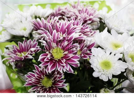 White and violet chrysanthemums in a bouquet