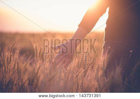 Woman in a wheat field in the sun