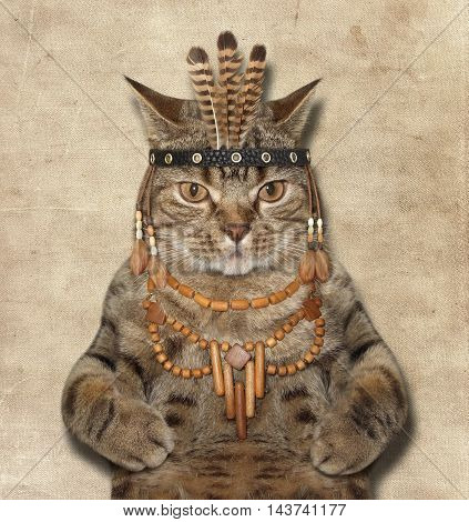 A scottish straight cat looks like a Indian chief.