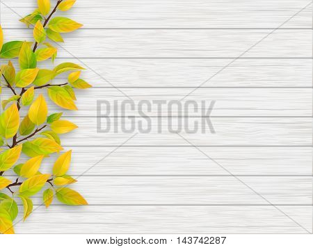 Autumn tree branch with yellow and green leaves on white old wooden background.