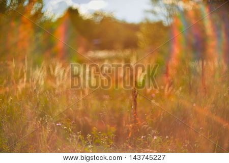 Photo of blurred field. Out of focus Summer Autumn sunset.