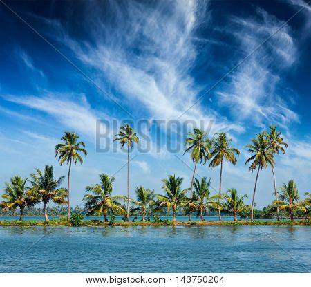 Kerala travel tourism background -  Palms at Kerala backwaters. Allepey, Kerala, India. This is very typical image of backwaters.
