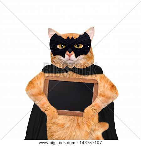 Cat wearing costume for halloween with wooden blank board. Isolated on white background.