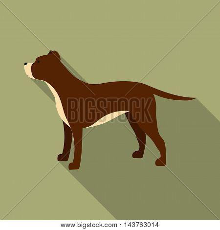 Pitbull vector illustration icon in flat design