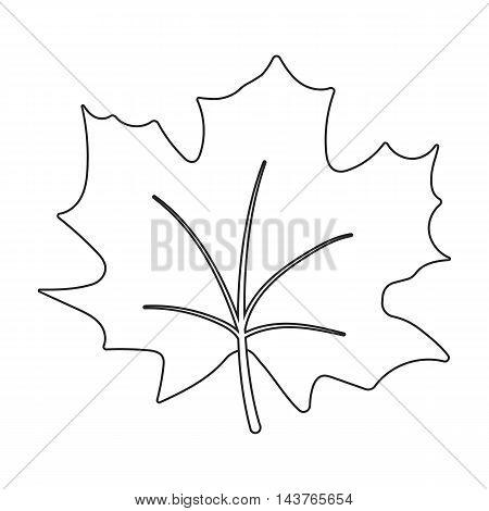 Maple Leaf vector illustration icon in line design